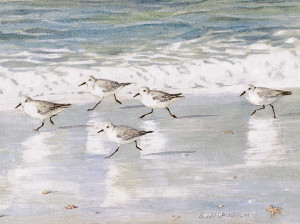 sandpipers-on-siesta-key-shawn-mcloughlin