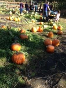 pumpkinfarm3