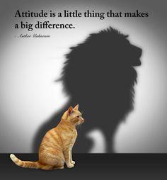 attitude-is